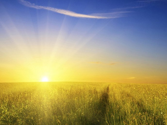 Morning sun on the field full with wheat - HD wallpaper