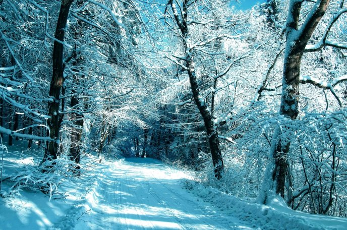 White path through the forest - Magic winter moments