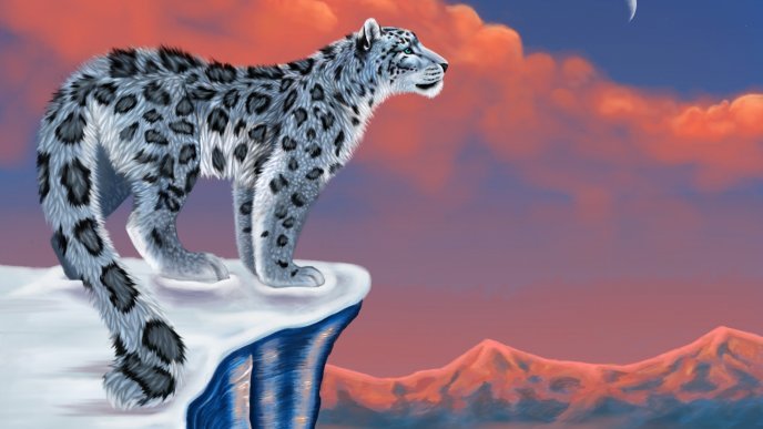 A white Lonely Leopard on a rock top