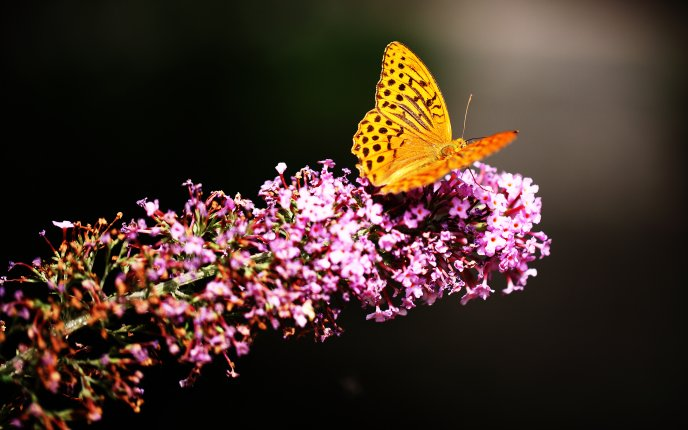 Yellow butterfly on a pink spring flower