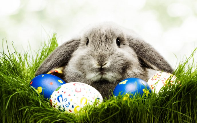 Funny grey rabbit and Easter eggs - HD Spring Holiday