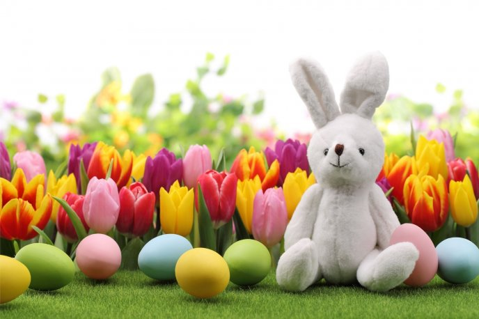 Fluffy rabbit in the garden full with colored tulips