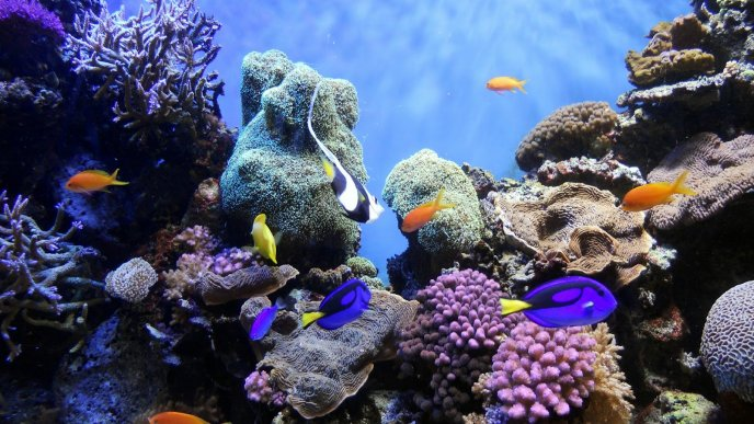 Colourful fishes - Wonderful underwater world