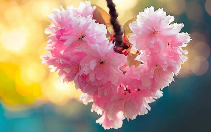 Wonderful cherry blossom flowers in shape of heart