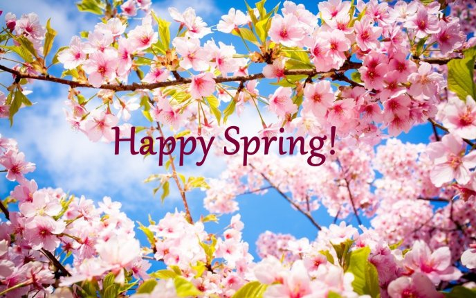 Happy Spring day 2020 - Stay home and relax time for family