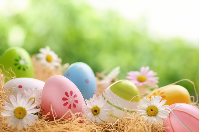 Painted eggs and white spring flowers -Easter Spring Holiday