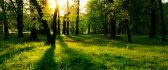 Green area in the woods - beautiful nature landscape
