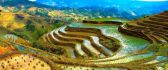 Rice Terraces Philippines - Food for life
