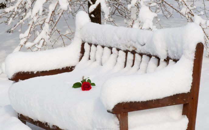 Beautiful red rose left on the white snow - HD wallpaper