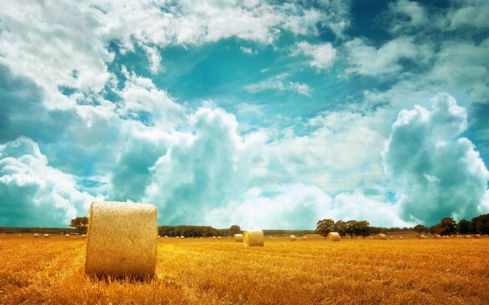 Beautiful nature landscape - golden field and fluffy clouds