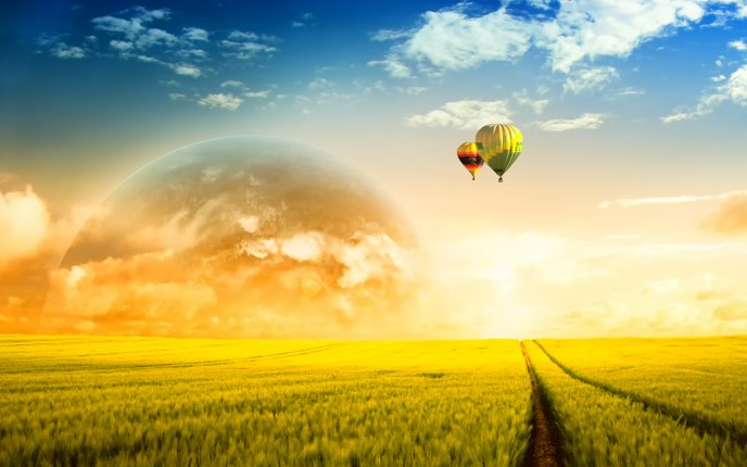 Two colored balloons float over the wheat field