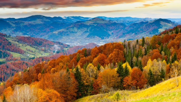 Colorful forest on mountain - Autumn landscape