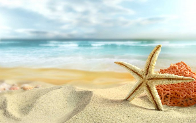 Starfish on the golden sand - Wonderful summer holiday