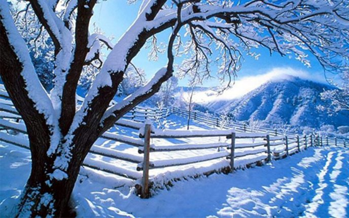 White tree and fence full with snow - HD nature wallpaper