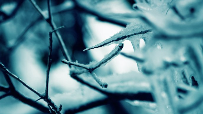 Professional winter photo - Macro frozen branches