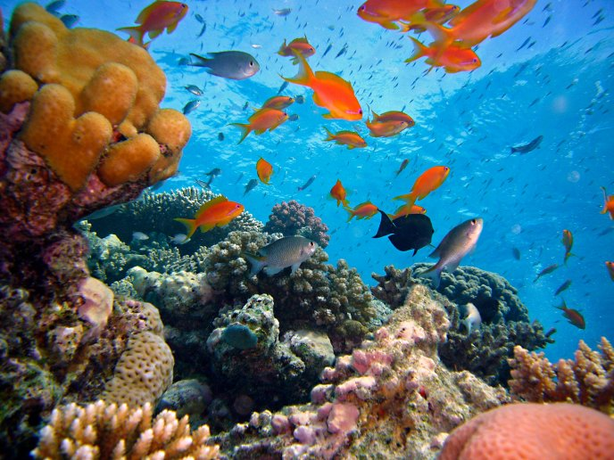 Colorful sea animals in the water habitat - Fish and coral