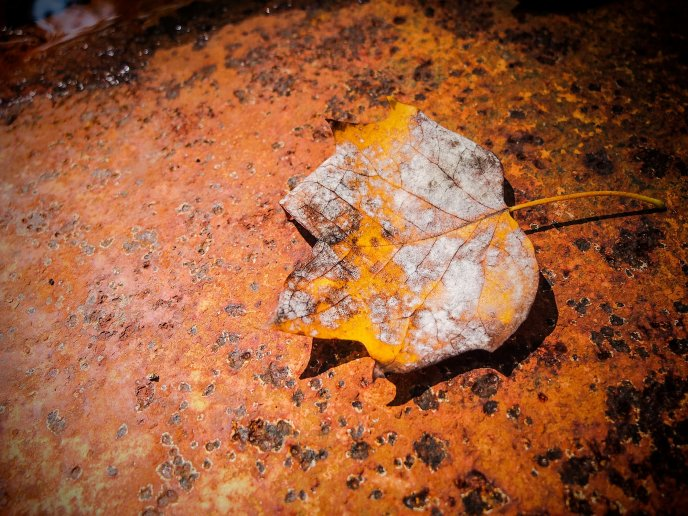 Autumn leaf on an old and rusty piece of iron