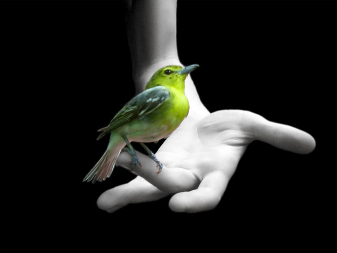 Little green bird in my hand - Pure and innocent love