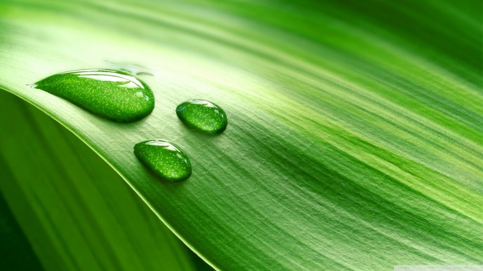 Perfect water drops on a green leaf - HD wallpaper