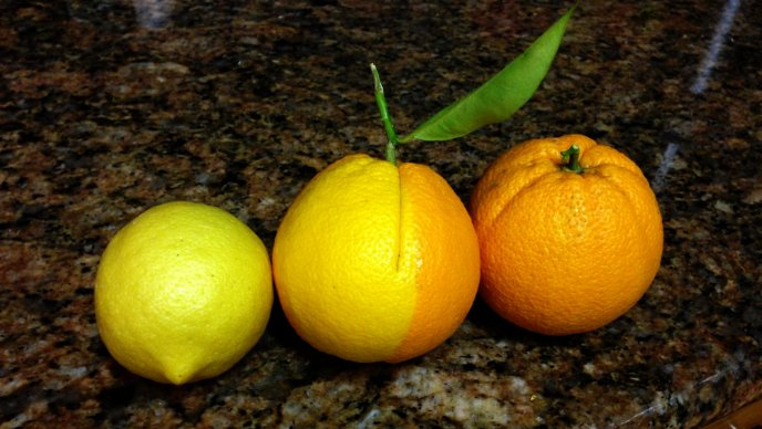 Half lemon half orange - strange citrus fruit in lemonade