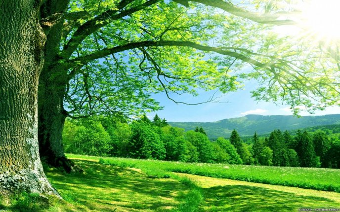 Wonderful green landscape nature view - Forest summer time
