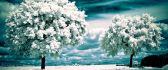 Winter in the middle of the summer - HD nature wallpaper