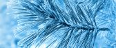 Frozen pine needles - beautiful HD macro wallpaper