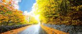 Wet road in the autumn season - HD nature wallpaper