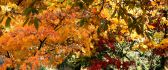 Colorful leaves in the nature - Autumn landscape