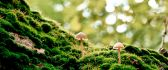 Two little mushrooms in the green forest grass-Nature beauty